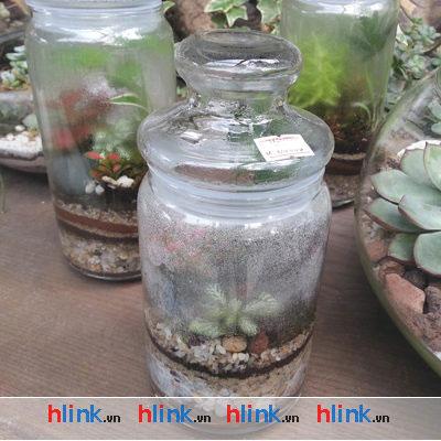 lo-thuy-tinh-B02526-03